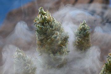 marijuana smoke - mj