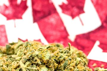 Weed - Canadian flag - MJ Canada