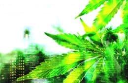 marijuana news weekly