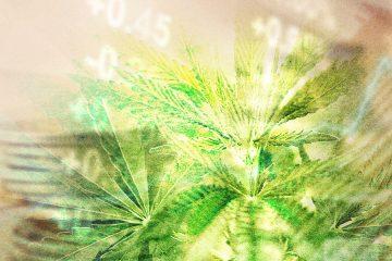 marijuana investor news