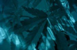 marijuana-weekly-18-06-15