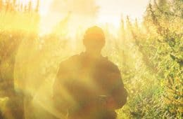 commercial scale marijuana outdoor grows