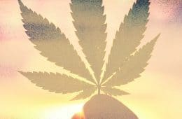 marijuana / cannabis / weed / pot / dagga - mj