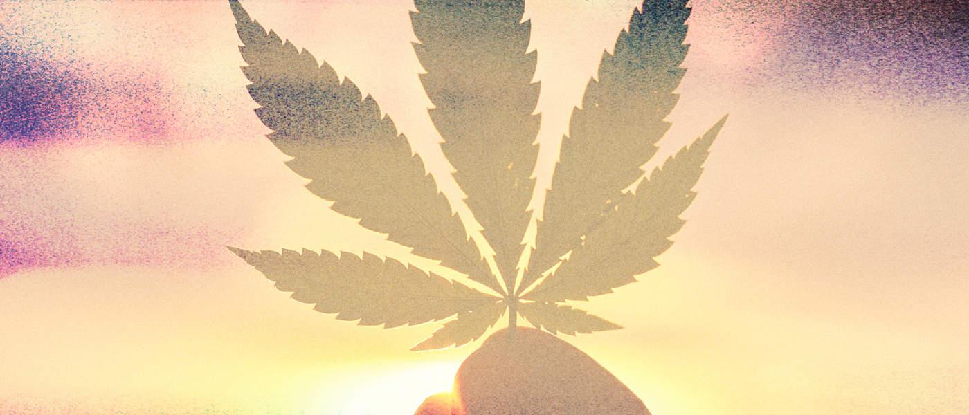 marijuana / cannabis / weed / pot / dagga - mj