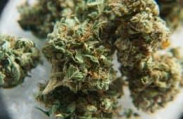 marijuana - mj investing 2