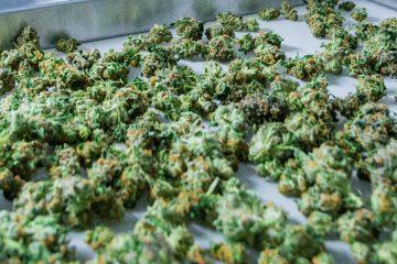 marijuana - mj investing 4