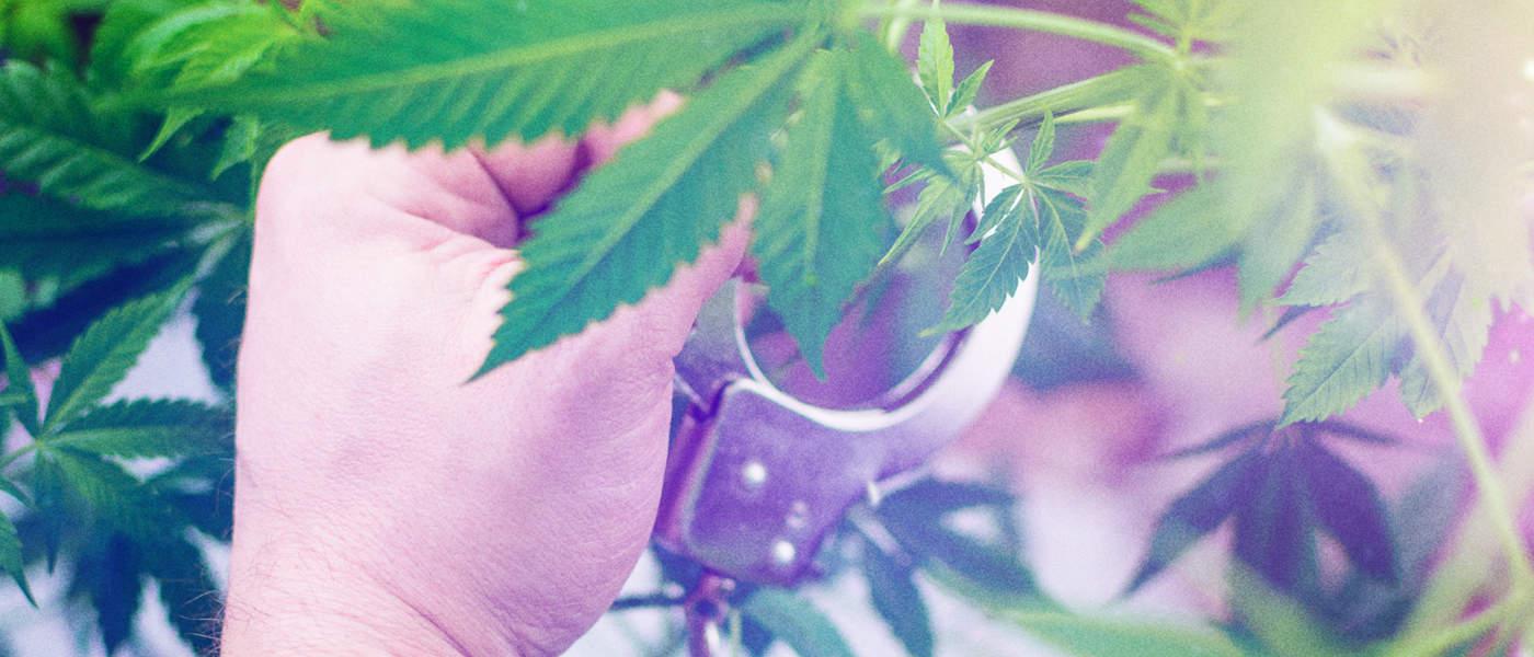 marijuana - mj law 8