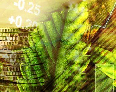 Marijuana stocks - mj stocks 3