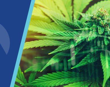 Cannabis Conviction Call