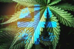 aurora-cannabis-01