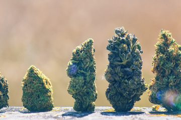Cannabis scorecard - best marijuana stocks