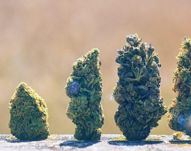 Cannabis scorecard - best marijuana stocks