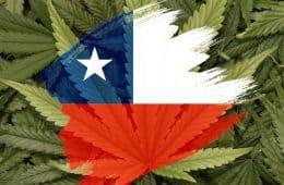 Marijuana - Chile - MJ