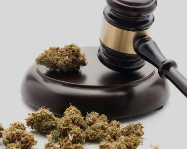 Marijuana law mj