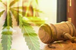 marijuana-law-12 mj