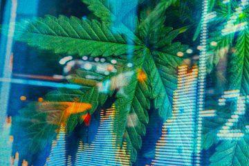 mj - marijuana stocks