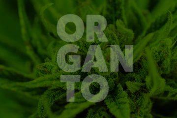 Organto Cannabis