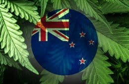 marijuana-country-new-zealand