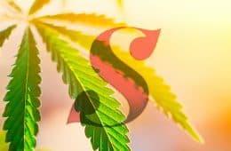 supreme-cannabis-company