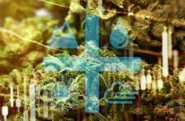 aurora-cannabis-02