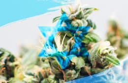 marijuana-country-israel-02