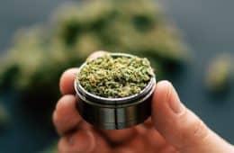 marijuana-generic-19