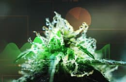 marijuana-statistics-data-01