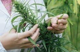 marijuana-medical-09