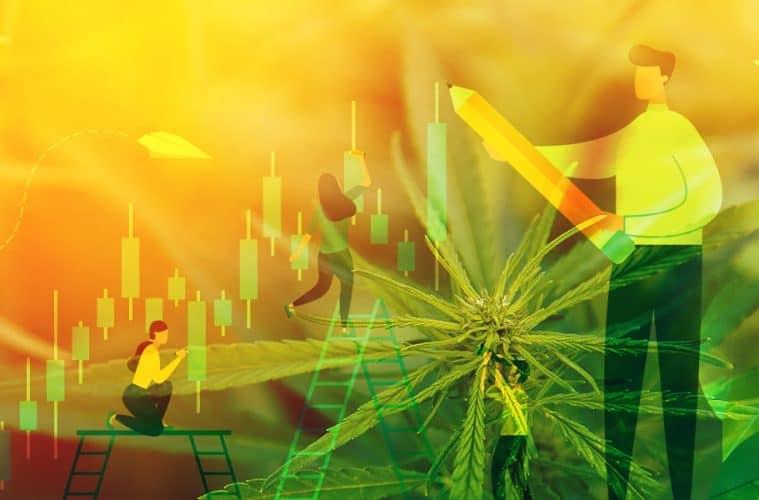 marijuana-scorecard-summer-01