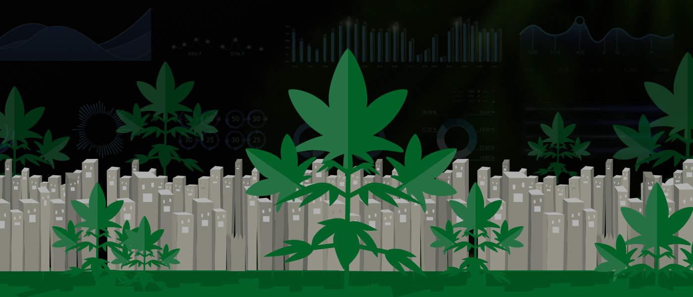 grizzle-cannabis-portfolio-01
